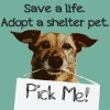 Escalon Animal Shelter Needs Your Help!
